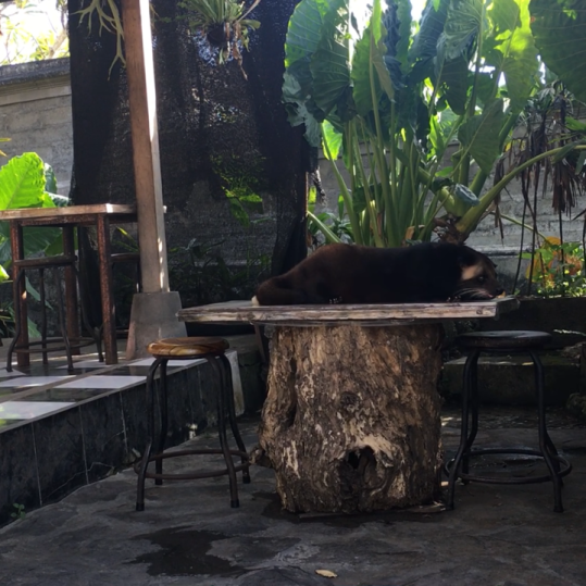 Lowak descansando tumbado